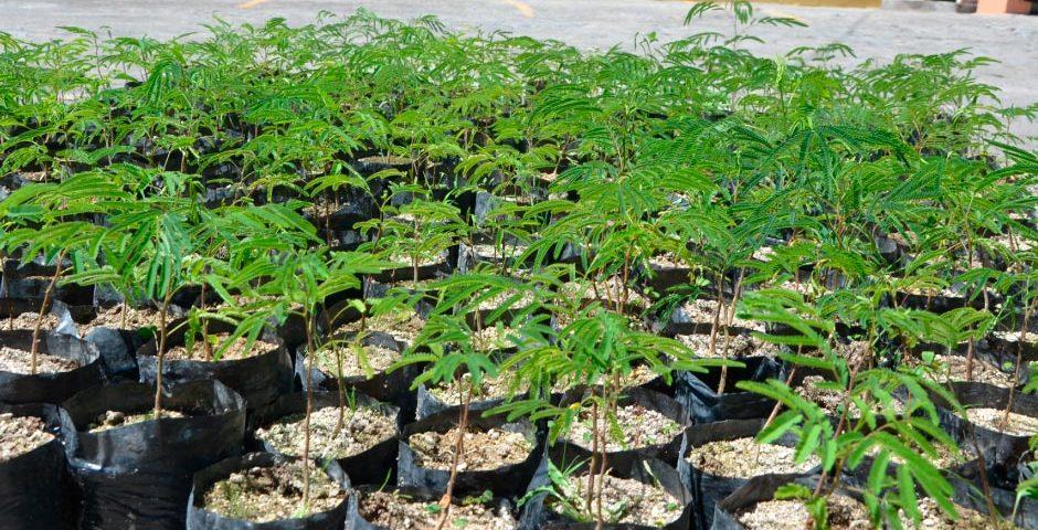 ucsm-dono-500-plantones-para-reforestar-la-zona-de-apipa-ready