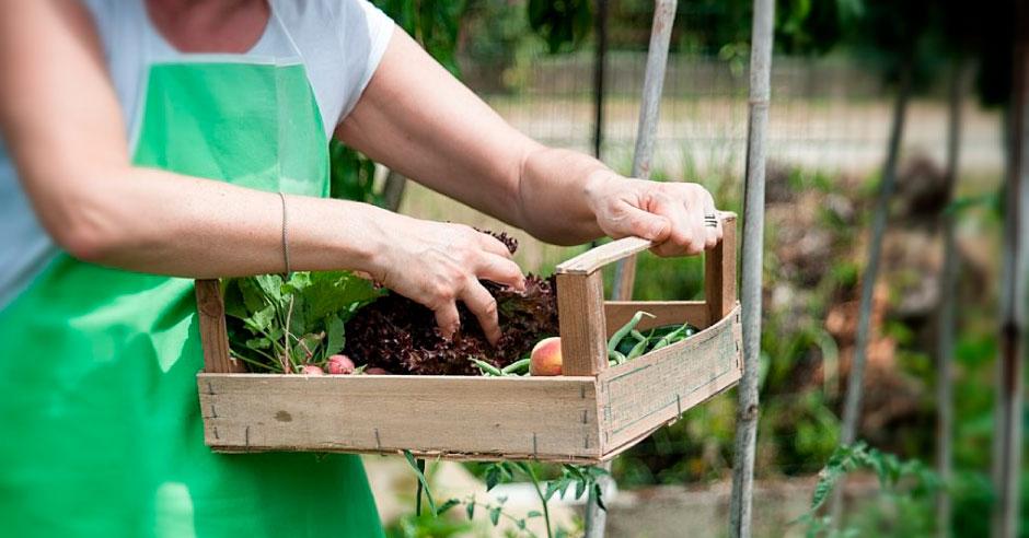 agricultura-organicaa