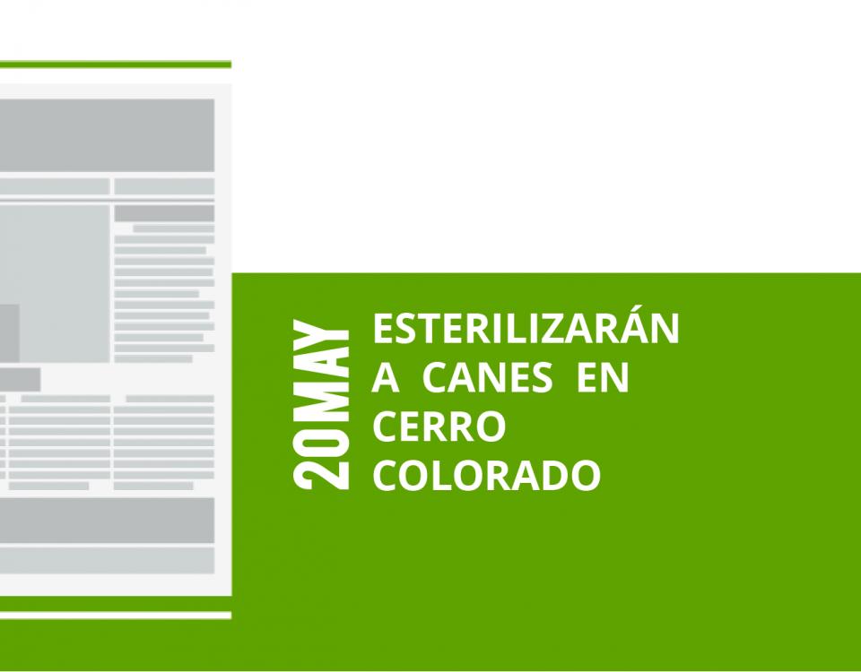 13-20-esterilizaran-a-canes-en-a-canes-en-cerro-cerro-coloradocolorado