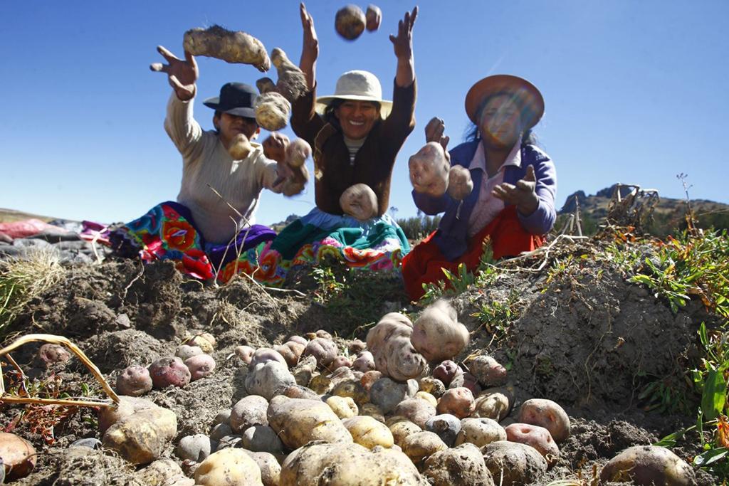 ucsm-el-6-del-pbi-del-peru-lo-aporta-el-sector-agrario-pese-a-estar-relegado-por-el-estado-1