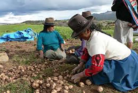 ucsm-el-6-del-pbi-del-peru-lo-aporta-el-sector-agrario-pese-a-estar-relegado-por-el-estado-2