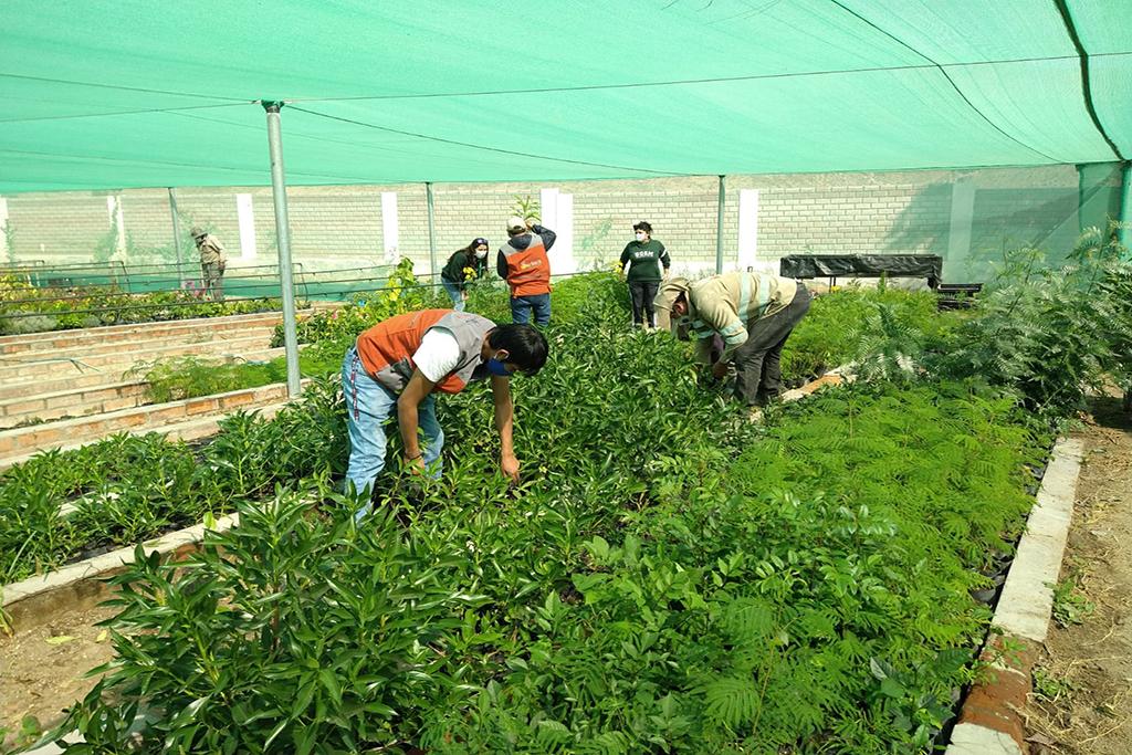 ucsm-proyecto-arequipa-ciudad-verde-entrego-1150-plantones-para-reforestar-el-distrito-de-sachaca-1