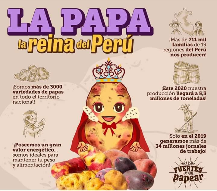 ucsm-al-ano-cada-peruano-consume-90-kilos-de-papa-como-parte-de-su-dieta-alimenticia-1