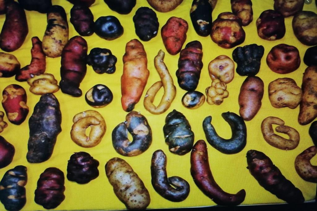 ucsm-al-ano-cada-peruano-consume-90-kilos-de-papa-como-parte-de-su-dieta-alimenticia-2